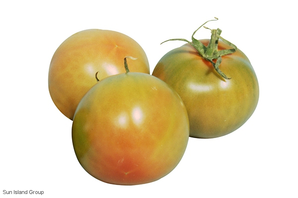 Tomate Ronde Lisse